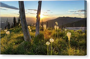 Beargrass At Sunset In The Swan Range Canvas Print