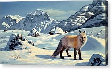 Beartooth Fox Canvas Print by Paul Krapf