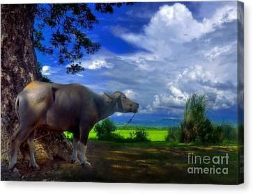 Beast Of Burden Canvas Print by George Paris