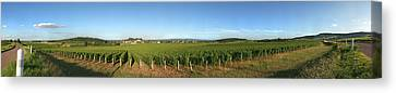 Beaujolais Canvas Print - Beaujolais Vineyard, Jully-les-buxy by Panoramic Images