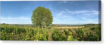 Beaujolais Canvas Print - Beaujolais Vineyard, Montagny by Panoramic Images