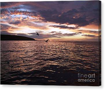 Beautiful Above Sharks Lurk Below Canvas Print