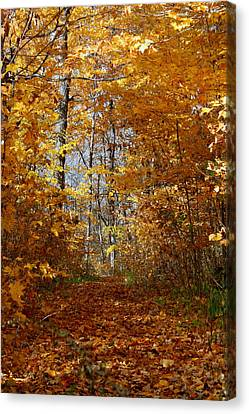 Beautiful Autumn Sanctuary Canvas Print by Kay Novy
