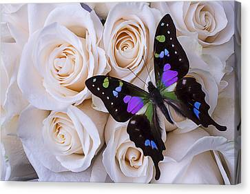 Beautiful Black Winged Butterfly Canvas Print by Garry Gay
