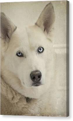 Beautiful Blue Eyes Canvas Print by Cindy Rubin