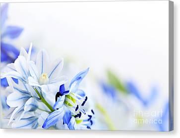 Beautiful  Blue Flower Art Canvas Print