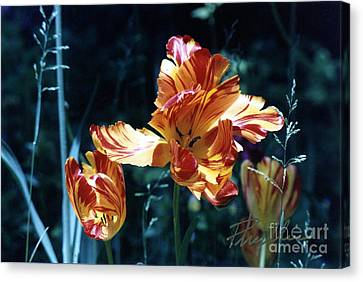 Canvas Print featuring the photograph Gorgeous Tulip by Phyllis Kaltenbach