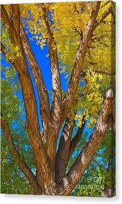 Rocky Mountain Canvas Print - Beautiful Blue Sky Autumn Day by James BO  Insogna