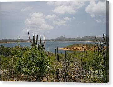 Beautiful Bonaire Canvas Print by Patricia Hofmeester