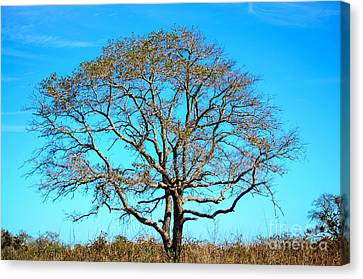 Canvas Print featuring the photograph Beautiful Branching by Debra Martz