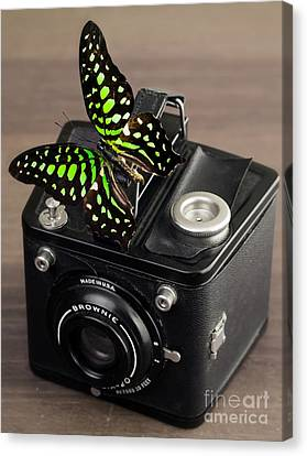 Beautiful Butterfly On A Kodak Brownie Camera Canvas Print by Edward Fielding