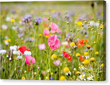 Beautiful Colorful Flowers Canvas Print by Boon Mee
