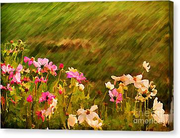 Beautiful Cosmos Canvas Print by Darren Fisher