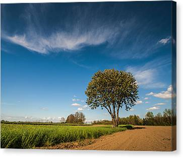 Beautiful Day Canvas Print by Davorin Mance