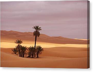 Beautiful Desert Canvas Print by Ivan Slosar