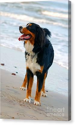 Beautiful Dog Portrait Canvas Print