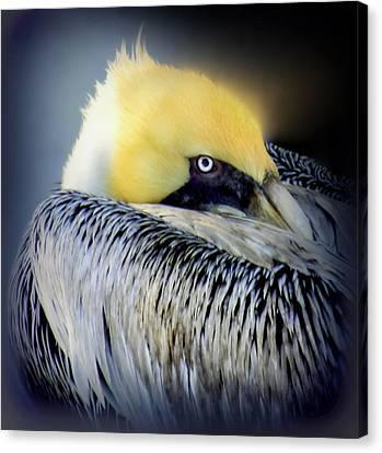 Beautiful Dreamer Canvas Print by Karen Wiles
