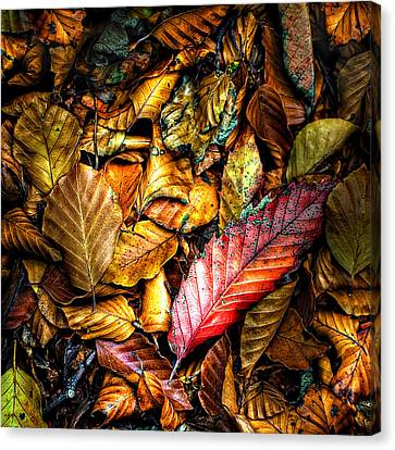 Wet Leaves Canvas Print - Beautiful Fall Color by Meirion Matthias