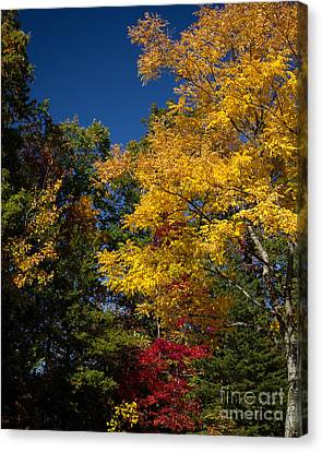 Beautiful Fall Canvas Print