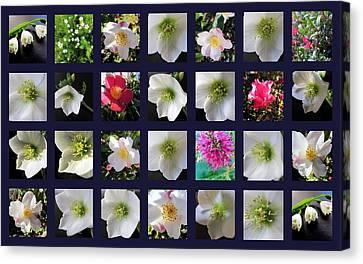 Beautiful Flowers Canvas Print by Joyce Woodhouse