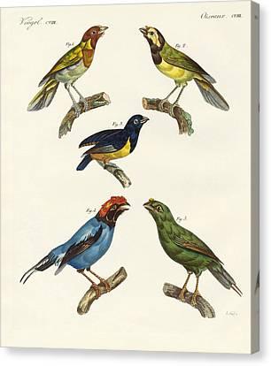 Beautiful Foreign Birds Canvas Print by Splendid Art Prints