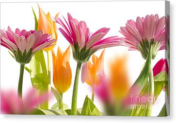 Artificial Flowers Wholesale Canvas Print - beautiful Gerber flower by Boon Mee