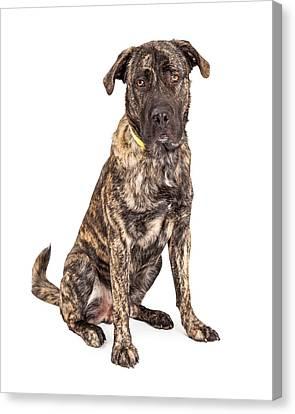 Beautiful Giant Breed Dog Sitting Canvas Print by Susan Schmitz