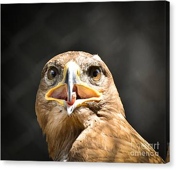 HAWK EAGLE HEAD PORTRAIT WILD BIRD PAINTING WILDERNESS ART REAL CANVAS PRINT