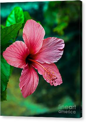 Haybale Canvas Print - Beautiful Hibiscus by Robert Bales
