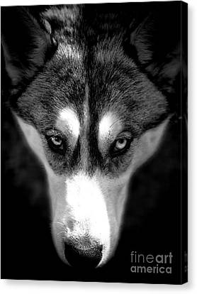 Beautiful Husky Canvas Print