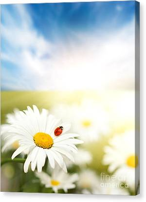 Beautiful Ladybug And Beautiful Flower Canvas Print by Boon Mee