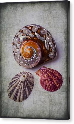 Nature Study Canvas Print - Beautiful Lovely Shells by Garry Gay