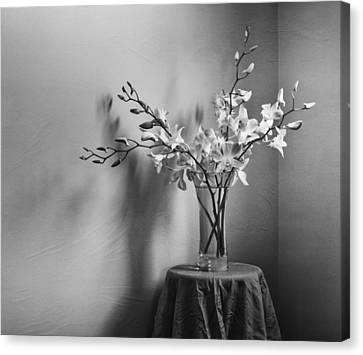 Beautiful Melancholy Canvas Print by Amy Weiss