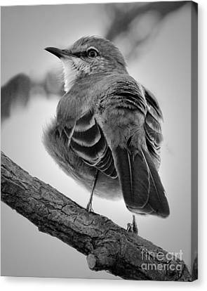 Canvas Print featuring the photograph Beautiful Mockingbird by Anita Oakley