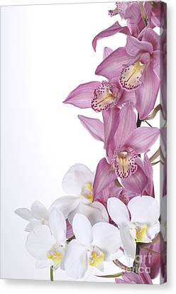 Beautiful Orchid Pink Canvas Print by Boon Mee