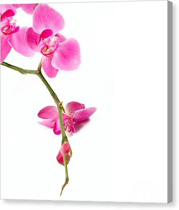 Beautiful Orchids Canvas Print by Boon Mee