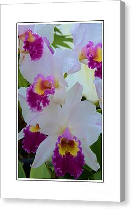 Beautiful Orchids Canvas Print by Kathleen Struckle