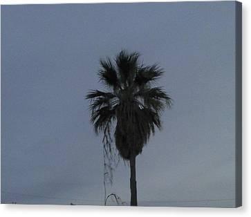 Beautiful Palm Tree Canvas Print by Rebekah Luper
