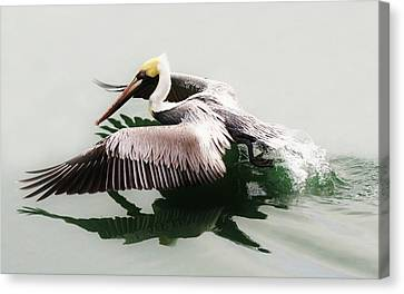 Beautiful Pelican Canvas Print by Paulette Thomas
