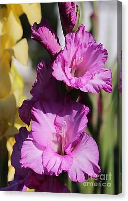 Beautiful Pink Gladiolus Canvas Print