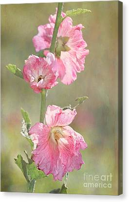 Beautiful Pink Hollyhock Flowers Canvas Print by Sabrina L Ryan