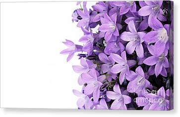 Beautiful Purple Flower Art Canvas Print by Boon Mee