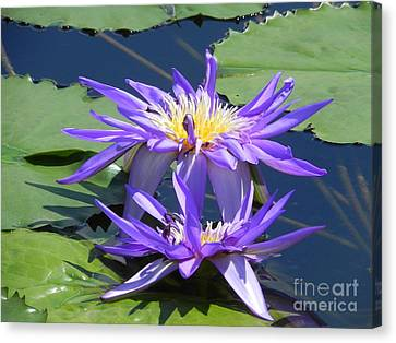 Canvas Print featuring the photograph Beautiful Purple Lilies by Chrisann Ellis