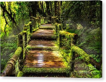 Beautiful Rain Forest At Ang Ka Nature Trail  Canvas Print by Anek Suwannaphoom