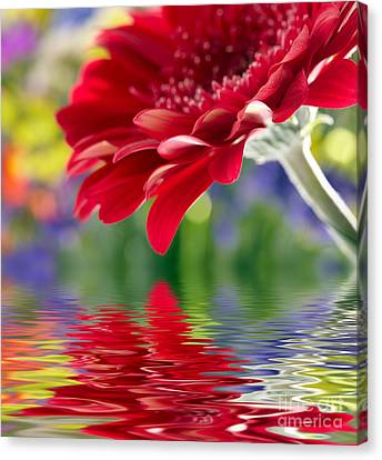 Beautiful Red Gerbera  Flower Canvas Print by Boon Mee