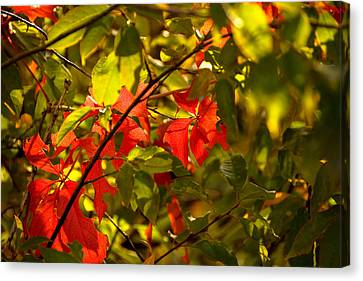 Green Leaves Canvas Print - Beautiful Red by Gloria Pasko