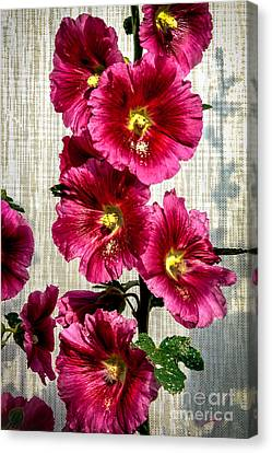 Beautiful Red Hollyhock Canvas Print by Robert Bales
