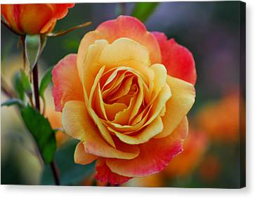 Beautiful Roses Canvas Print by Jean-Jacques Thebault