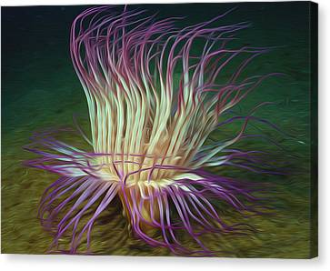 Beautiful Sea Anemone 1 Canvas Print by Lanjee Chee