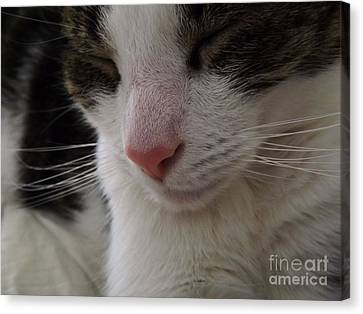 Canvas Print featuring the photograph Beautiful Slumber by Robyn King